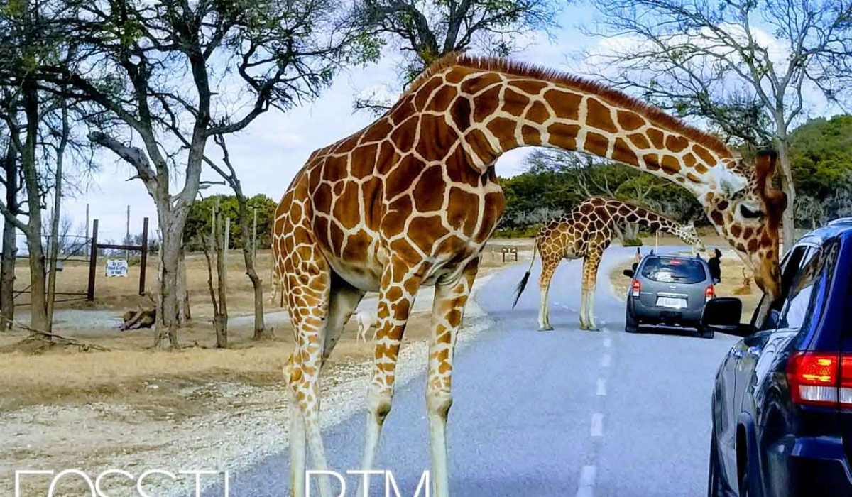 Travel : Fossil Rim Wildlife Center – Glen Rose, Texas