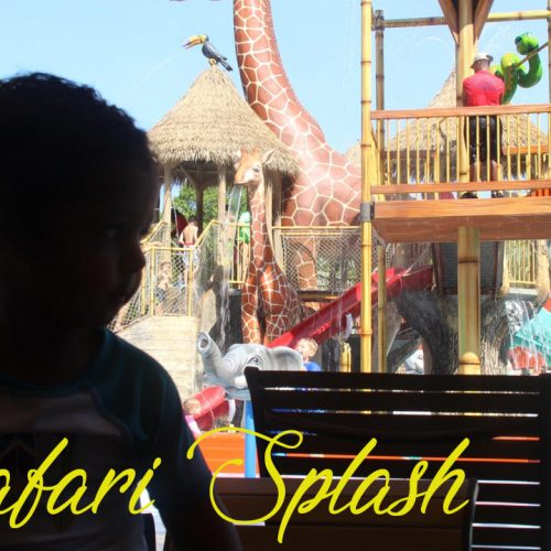 Safari Splash Fort Worth Zoo | Fun For The Whole Family